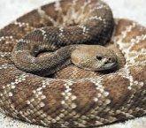 Cobra grande e cobra pequena